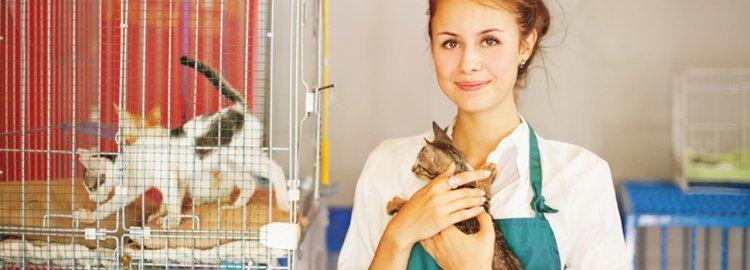 Tierheilpraktiker Studium